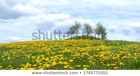 vidéki · díszlet · virágok · Finnország · vidéki · táj · piros - stock fotó © tainasohlman