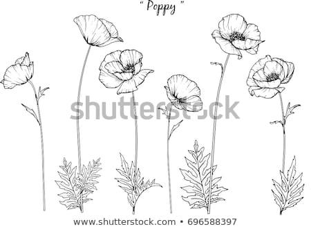 Vintage · карт · мак · цветок · ретро - Сток-фото © kali