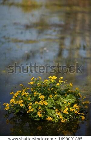 çiçekler ağaçlar sarı su Stok fotoğraf © Mps197