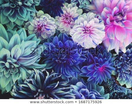 kleurrijk · dahlia · bloem · water · abstract · schoonheid - stockfoto © Paha_L