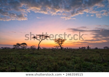 ストックフォト: 日の出 · アフリカ · 平野 · 風景 · 風光明媚な · ボツワナ
