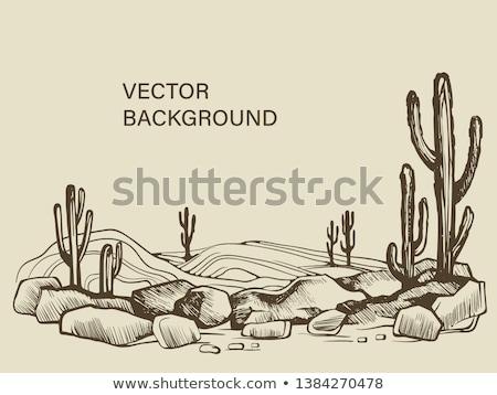 a isolated desert scene stock photo © bluering