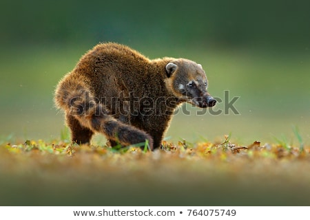 Бурый медведь джунгли сцена иллюстрация природы лист Сток-фото © bluering