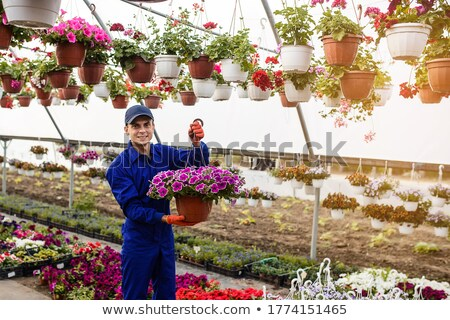 Stock photo: Happy young florist or greenhouse worker with potted petunias