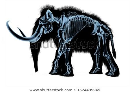Esqueleto raio x efeito preto corpo silhueta Foto stock © Pixelchaos
