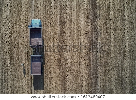 Aratás dolgozik búzamező étel mező búza Stock fotó © stevemc