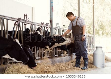 牛 農家 男 肖像 白 男性 ストックフォト © photography33