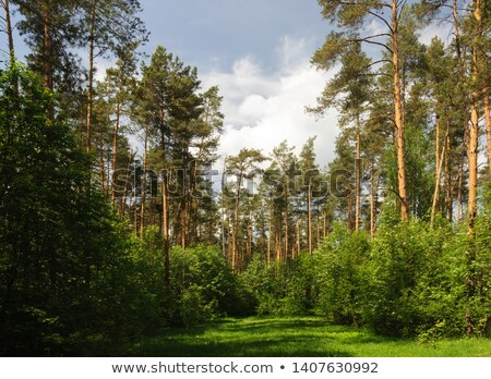 clear spring Stock photo © prill