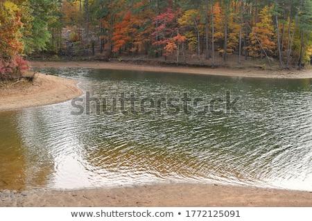 autumn leaves on the shore of a lake stock photo © haraldmuc