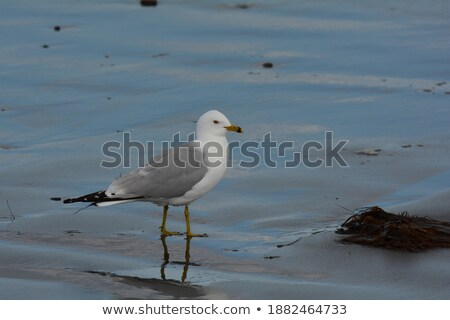 gull 20 Stock photo © LianeM