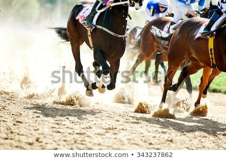 Részlet verseny ló gyönyörű fehér ló naplemente Stock fotó © CaptureLight