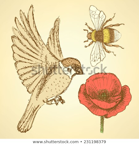 Kroki haşhaş arı serçe bağbozumu stil Stok fotoğraf © kali