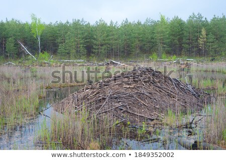 Green swamp lake in cloudy weather Stock photo © Sportactive