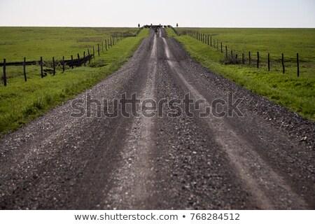Road receding through farmland Stock photo © ndjohnston