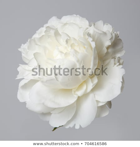 Stock photo: Blooming white flowers