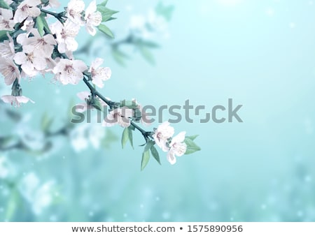 Nature in blossom. Stock photo © Fisher