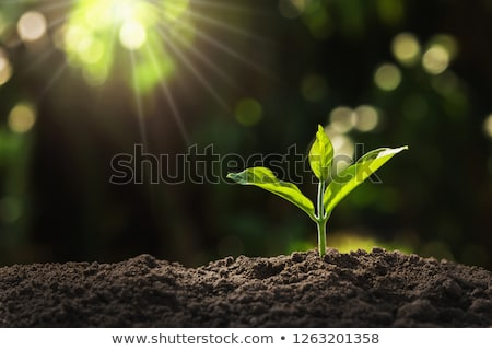 Stockfoto: Jonge · planten · twee · zwarte · aarde · boom