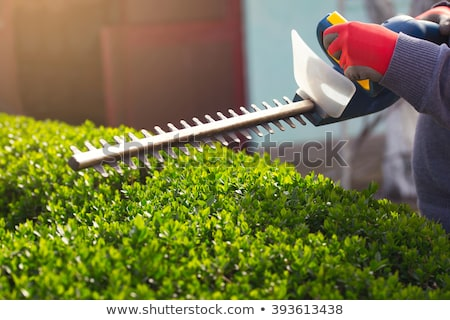 Hedge trimmer Stock photo © Stocksnapper