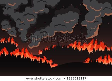 Sylwetka wildfire lasu ilustracja ognia drewna Zdjęcia stock © bluering