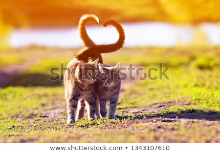 Little Cat in Love Stock photo © cthoman