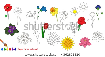 Coloring book narcissus flower image 1 Stock photo © clairev