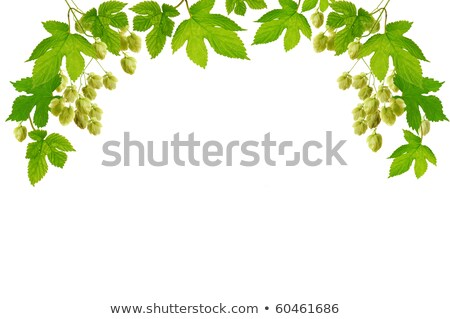 Frame with fresh hop branches Stock photo © inxti