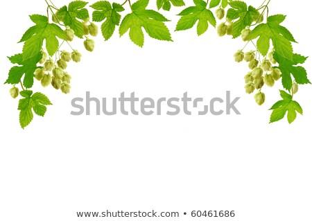 folhas · verdes · salto · escalada · planta · flores · usado - foto stock © inxti