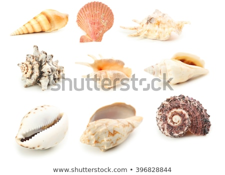 closeup beautiful sea shell with sand on white background stock photo © inxti