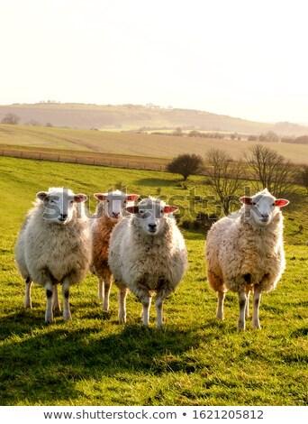 Kırsal İngilizce manzara güzel yeşil Stok fotoğraf © pixelmemoirs