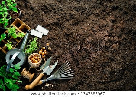 Green onions in garden Stock photo © pzaxe