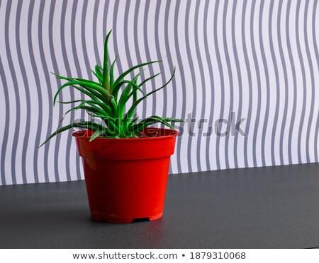 Intensief groene plant bloempot bloem textuur Stockfoto © konradbak