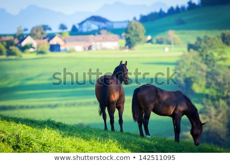 horse farm in the mountains stock photo © kotenko