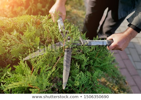Shrub Shear Stock photo © ajt