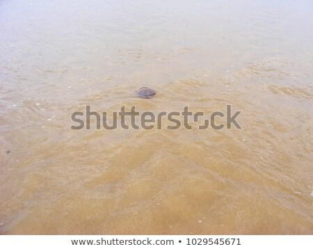 piros · rózsaszín · meduza · víz · rózsa · hal - stock fotó © lunamarina