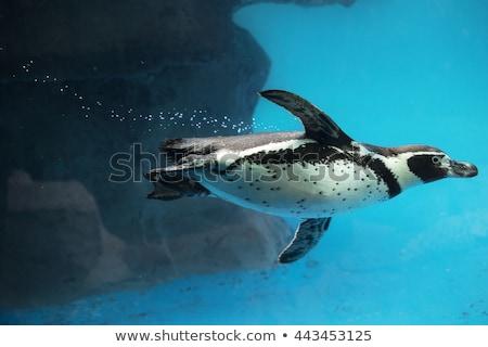 pingvin · állatkert · Barcelona · kő · Európa · fotózás - stock fotó © elenarts