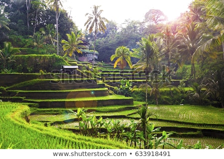 rice terraces in Bali Stock photo © meinzahn