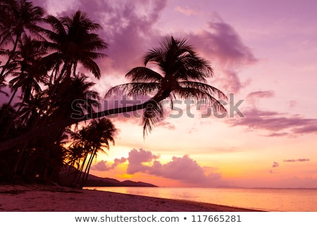 Stock photo: Beautiful tropical sunset with palm trees silhoette