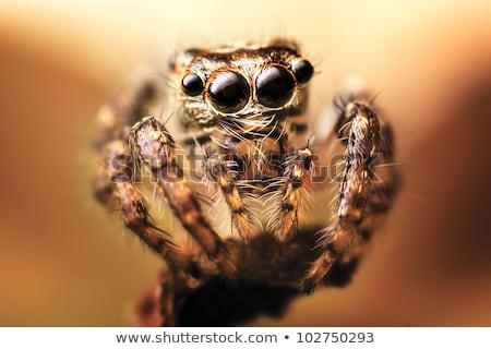 barna · pók · zöld · fal · makró · természet - stock fotó © mady70