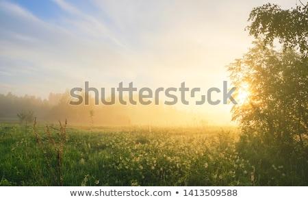 Восход · туманный · луговой · туманный · осень - Сток-фото © juhku