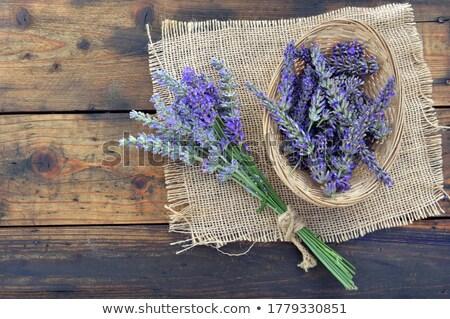 belo · roxo · lavanda · arbusto · coberto · denso - foto stock © mcherevan