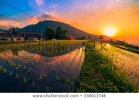 rice terraced paddy fields in central bali indonesia stock photo © artush