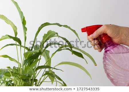 Su kadın bahçıvan eller ayakta Stok fotoğraf © deandrobot