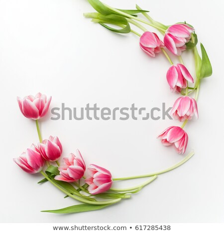 round banner with red tulips stock photo © blackmoon979