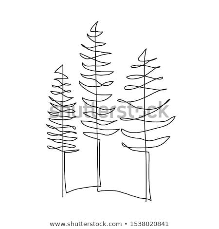 лес аннотация вектора икона иллюстрация весны Сток-фото © blaskorizov