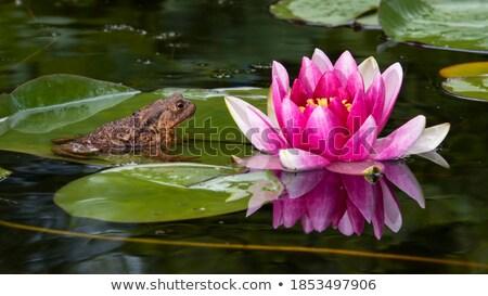 Reflexões grande folha planta superfície da água lagoa Foto stock © AlessandroZocc