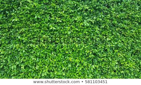 Virágmintás zöld levelek szelektív fókusz fény háttér zöld Stock fotó © furmanphoto