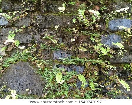 Mur pokryty mech paprocie tekstury trawy Zdjęcia stock © galitskaya