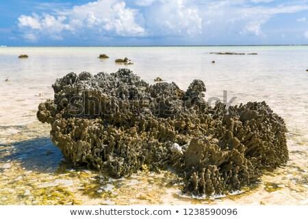 Coral praia francês polinésia invertebrado animais selvagens Foto stock © dolgachov