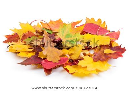 sere autumn leaves Stock photo © prill
