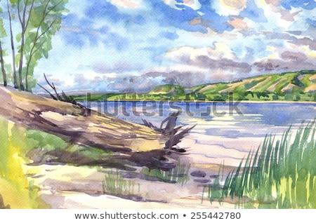 Groene Geel strand gras Blauw heldere hemel Stockfoto © Frankljr